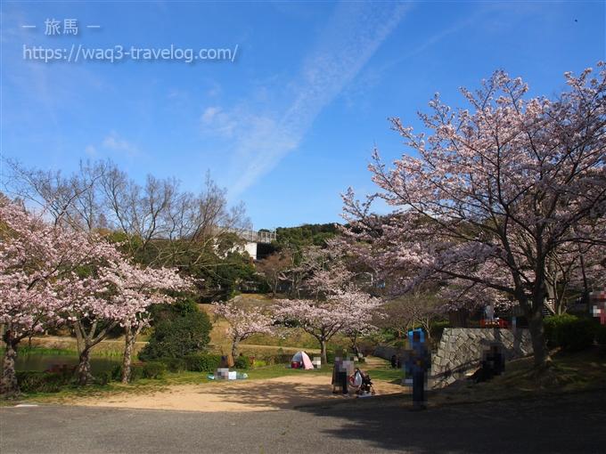 奥須磨公園の桜