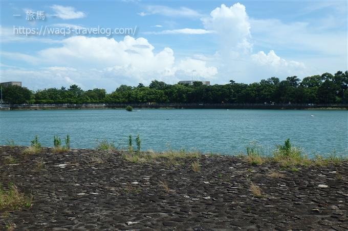 昆陽池公園の池