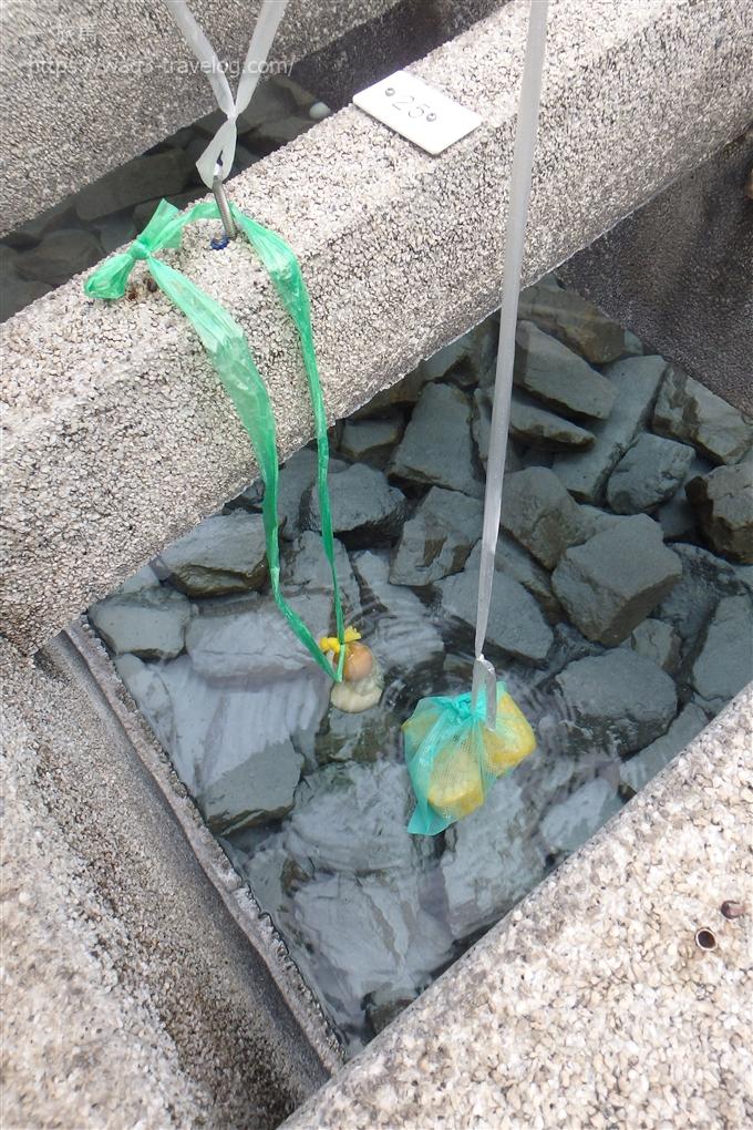 湯村温泉の荒湯で卵とトウモロコシを茹でる