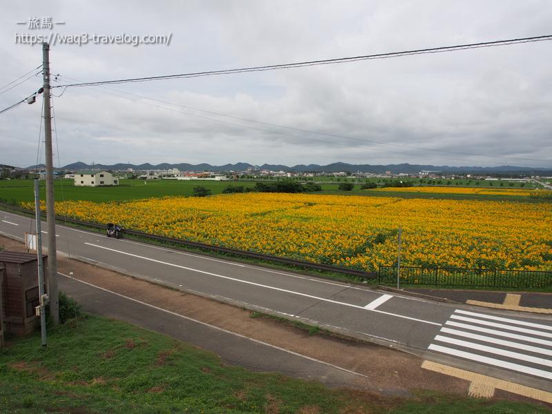 兵庫県小野市「ひまわりの丘公園」