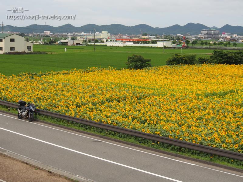兵庫県小野市「ひまわりの丘公園」とバンディット1250S