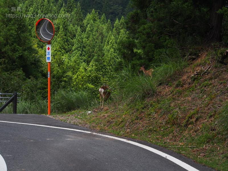 国道に出てきた鹿