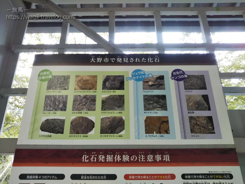 大野市で発見された化石