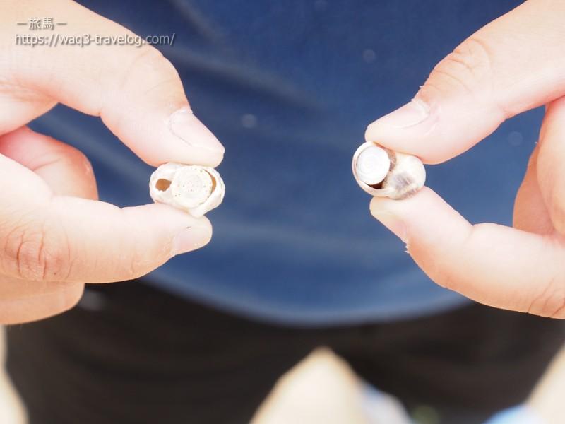 貝殻と貝のフタ