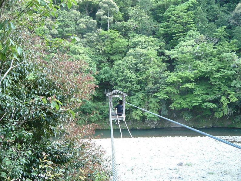 十津川村 野猿